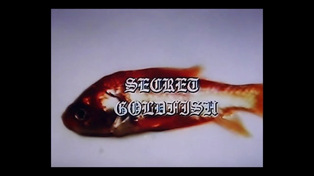 Secret Goldfish
