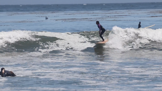 South Swell Summer