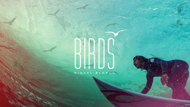 Birds - Miguel Blanco