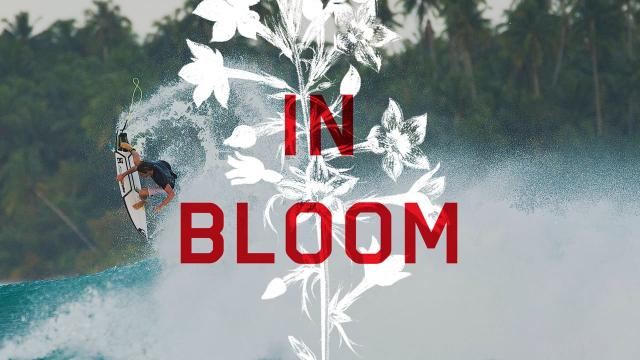 In Bloom: Leo Fioravanti Part 2