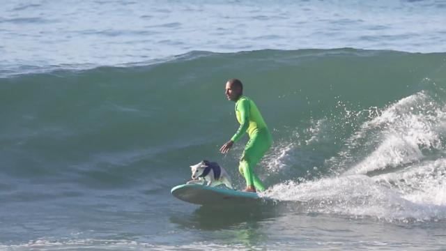 Ryan Rustan, Sugar the Surfing Dog, Jesse Billauer, Edwin Martin