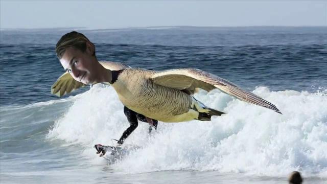 The Goose Is Loose (Colin Moran) Newport