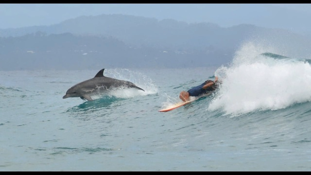 Dolphins and Surfers - Byron Bay, Australia :: Sean O'Shea Art